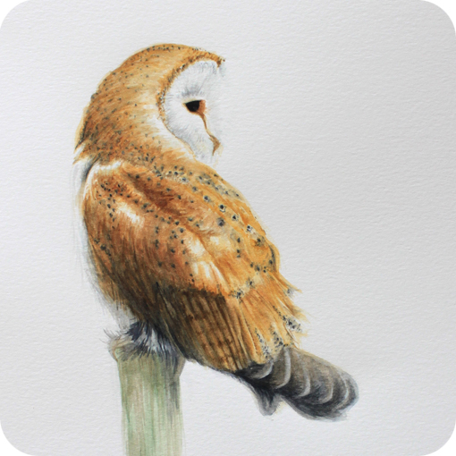 Discover The Artists And Artisans Of The Bruce Peninsula    Owl Eyes Paintings